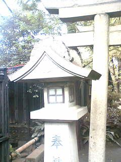 shrinez_2.jpg